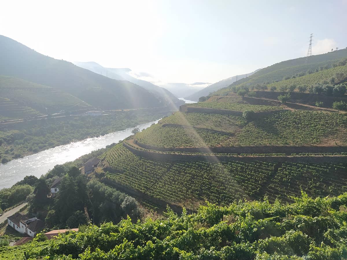 Douro Tal Blick