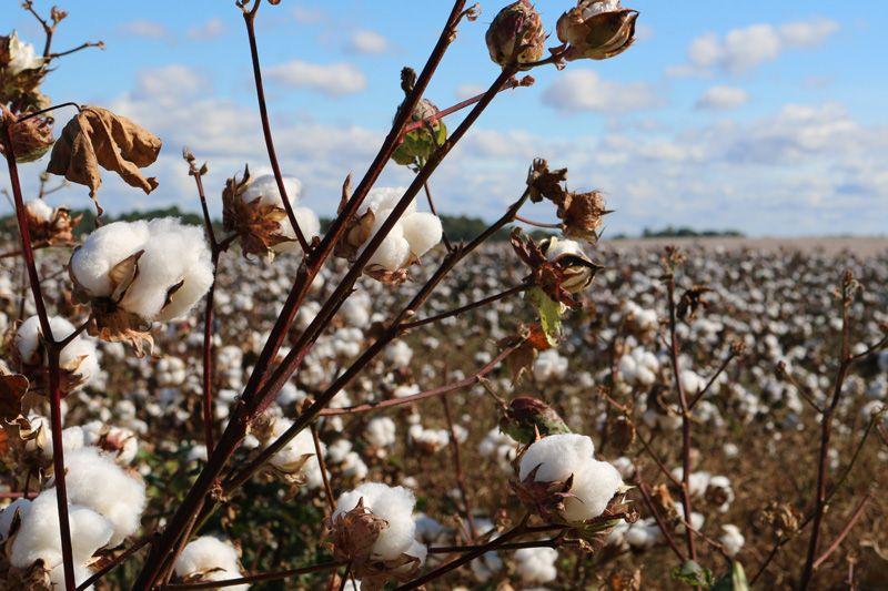organic-cotton-oekologische-baumwolle-schuhe-compressor