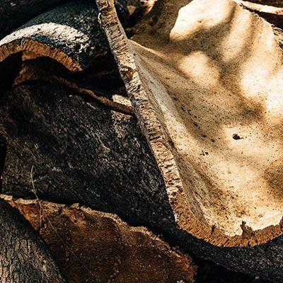 media/image/Doghammer_Kork_Portugal.jpg